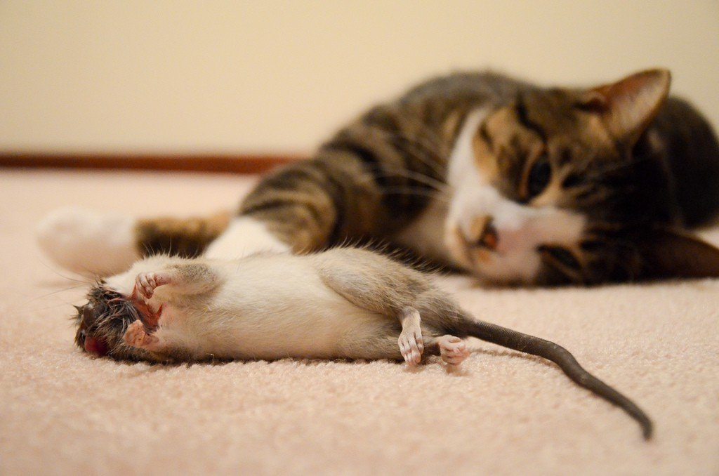 Как бороться с мышами в частном доме народными средствами