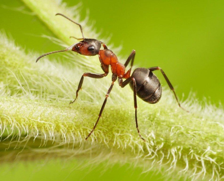 Ультразвуковой отпугиватель от садовых муравьев отпугиватель грызунов алиэкспресс
