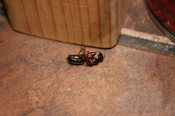 От чего появляются муравьи в квартире