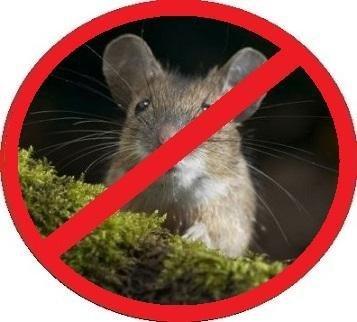 Чем травить мышей в домашних условиях