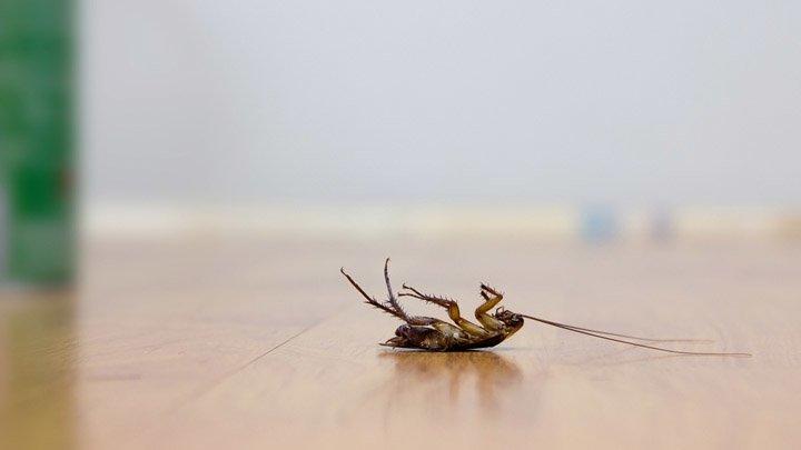 От тараканов гель самый эффективный по отзывам
