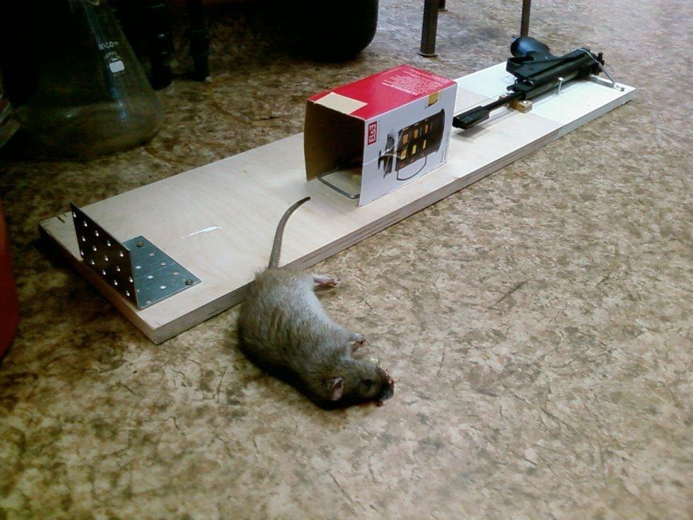Ловушки для мышей своими руками видео - Раум Профи